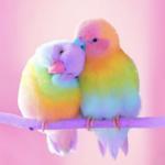 Bird Wallpapers HD Apk App