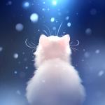 Snow Kitten Live Wallpaper APK